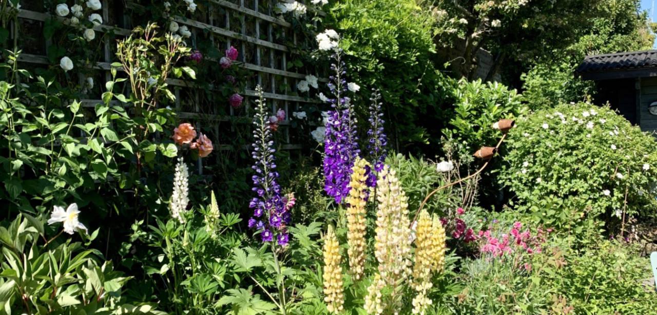 springwells_garden_flowers_hero