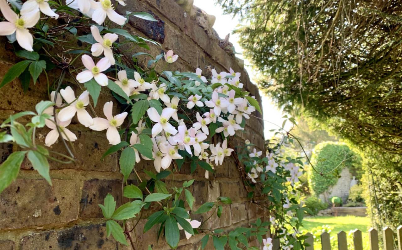 Springwells flowers on garden wall
