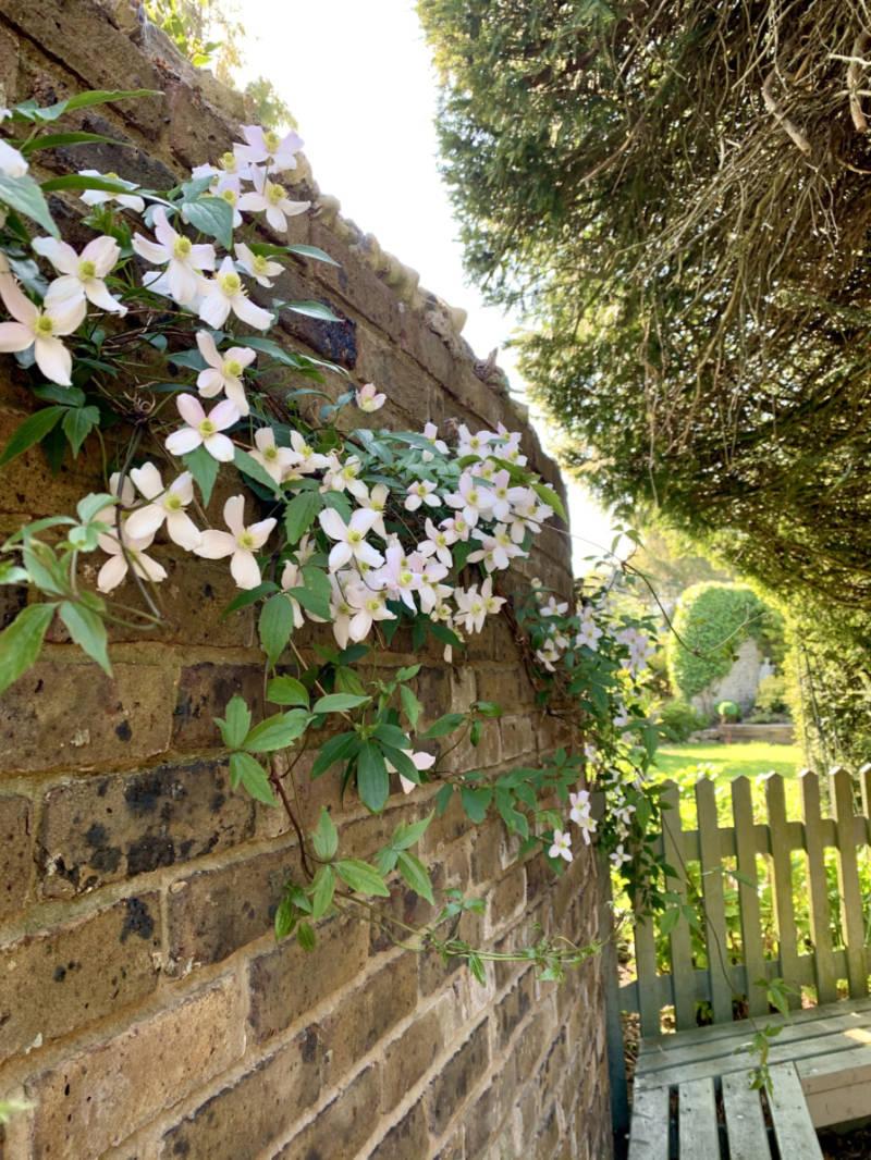 springwells_garden_wall_sml